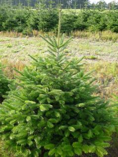 Weihnachtsbäume aus Bayern und Baden-Württemberg